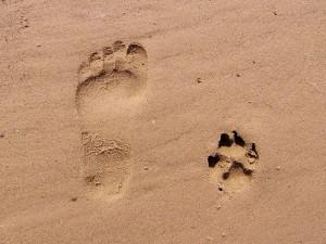 footprint-261337_1280