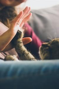 En effet, si aujourd'hui 80% des chiens et des chats sont assurés en Suède, 30% en Angleterre et 10% aux Etats Unis, la France est loin derrière avec seulement 4% de chiens et de chats assurés. Bien entendu, un animal peut vivre de nombreuses années sans avoir de soucis. Néanmoins, le jour où une maladie se déclare ou qu'un accident arrive, il n'est pas toujours facile de faire face aux frais vétérinaire. C'est pourquoi, assurer son animal de compagnie est l'une des meilleures façons de prendre soin de lui.
